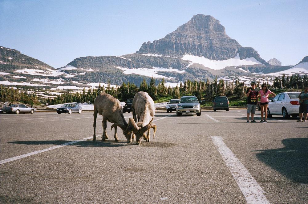 trey-burns_glacier-national-park