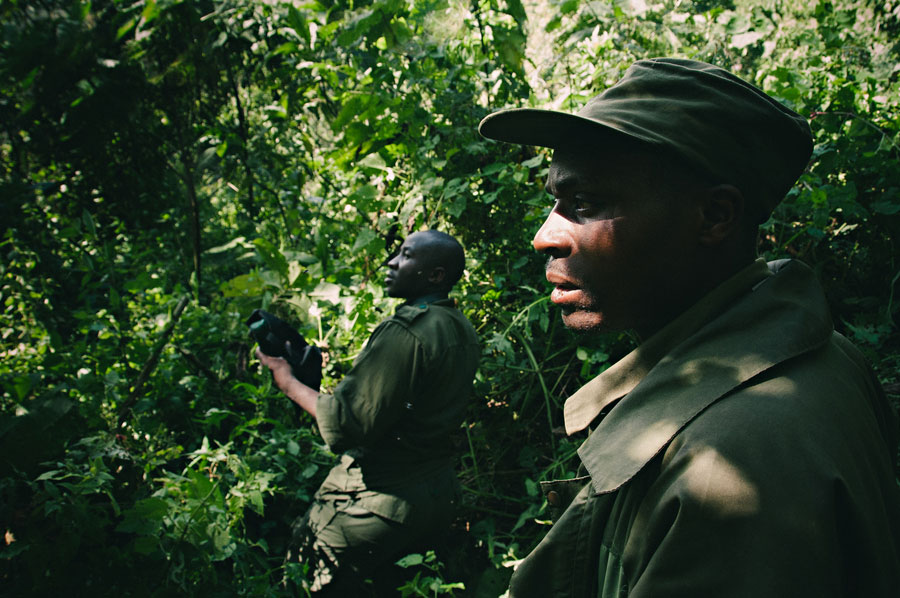 mountain-gorillas-uganda-006.jpg