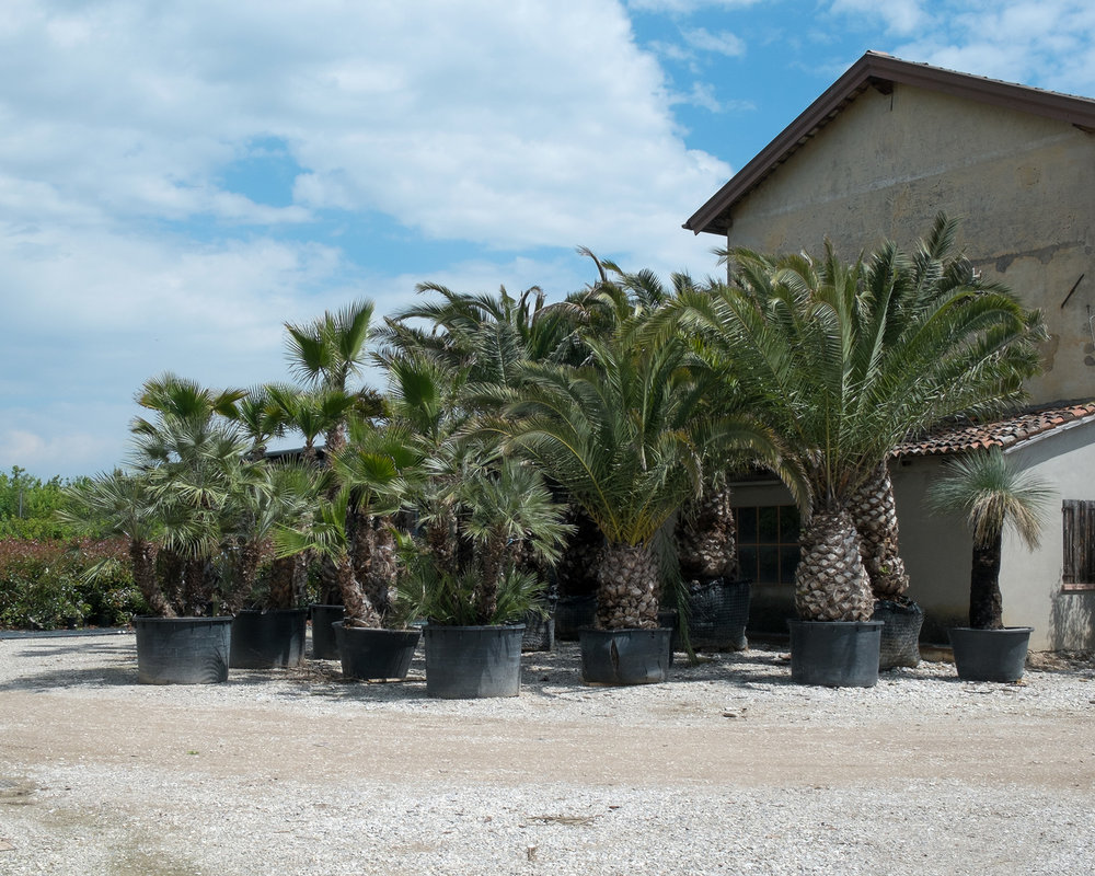 Plant nursery, Treviso, 2016