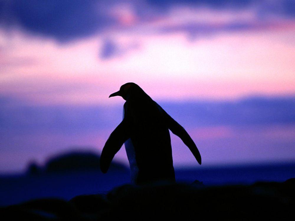 penguin_silhouette