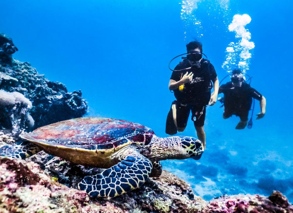 Scuba Diving in Thailands Phi Phi Island — No Destinations