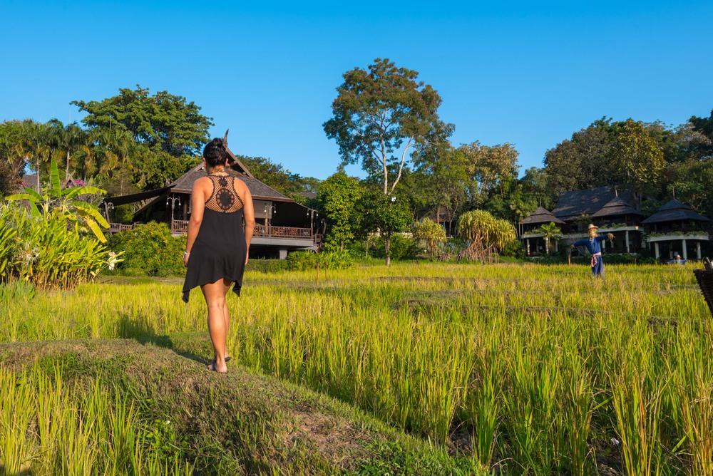 Walking through the rice fields at Four Seasons Chiang Mai