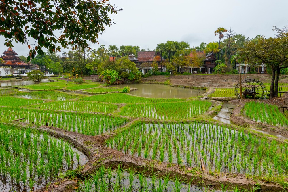 Families can participate in rice planting in the fields