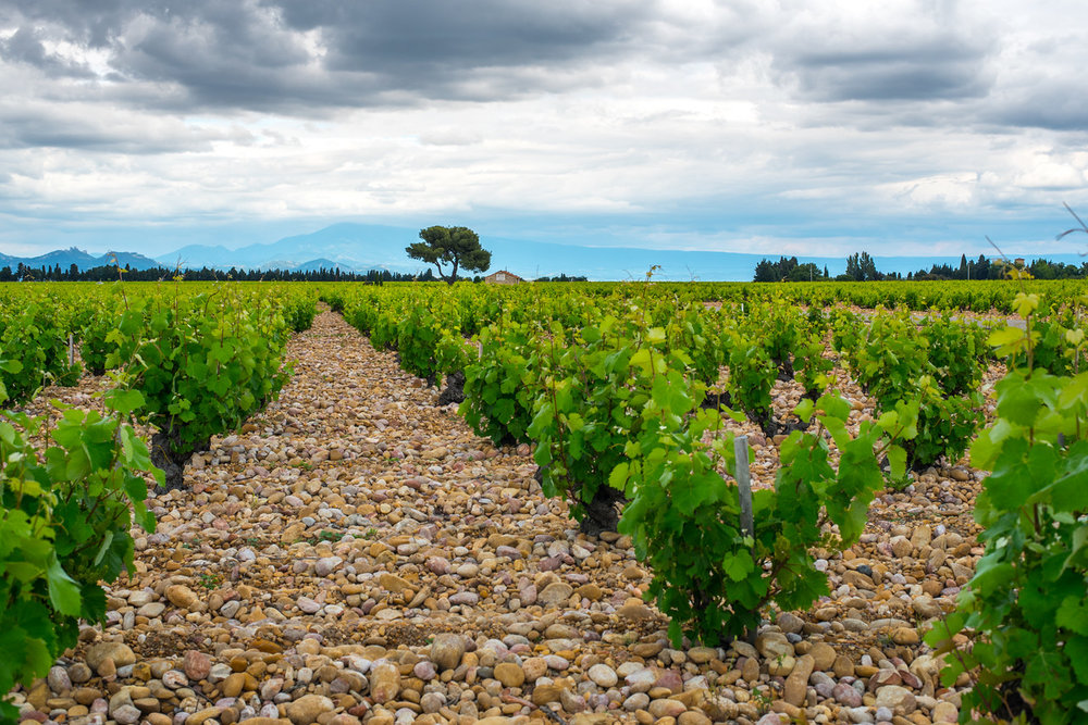 The stony vineyards of Châteauneuf du Pape