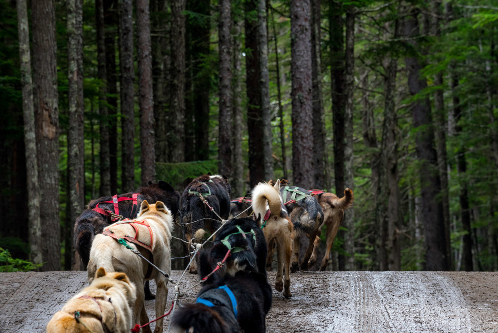 Visiting a Musher Camp in Skagway
