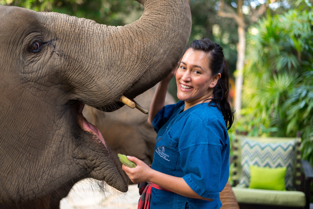 Your get many opportunities to interact with elephants all day long