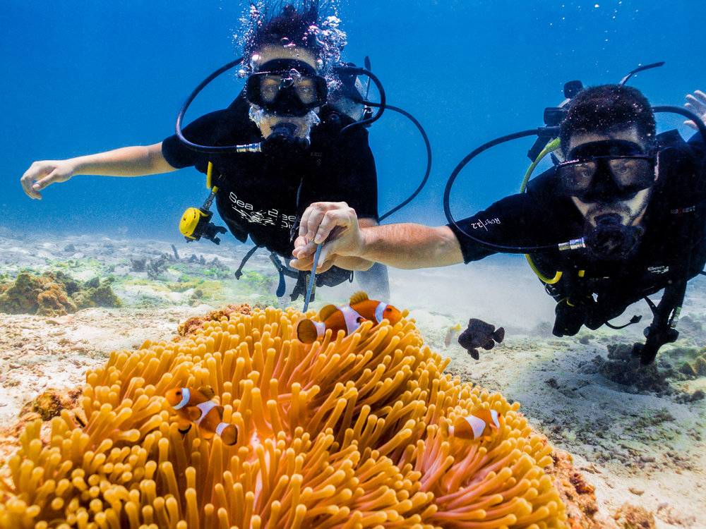 Scuba diving in thailand 39 s phi phi island no destinations - Where to dive in thailand ...