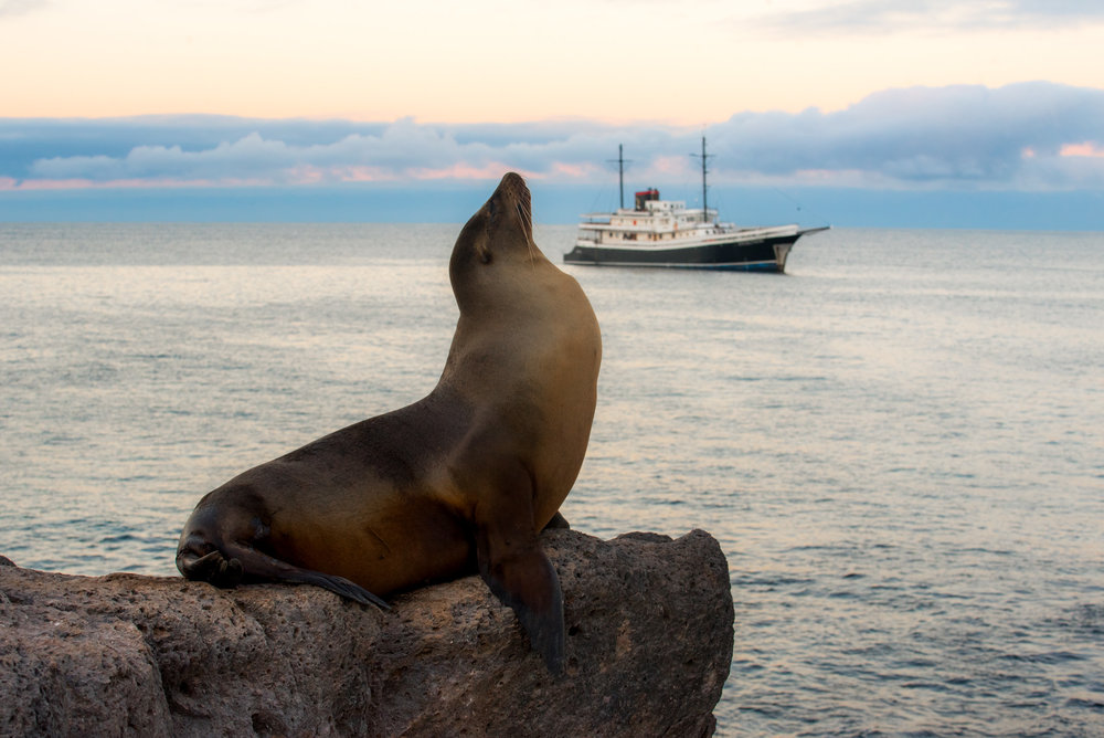 A cruise is the best way to discover the more remote corners of the Galapagos Islands