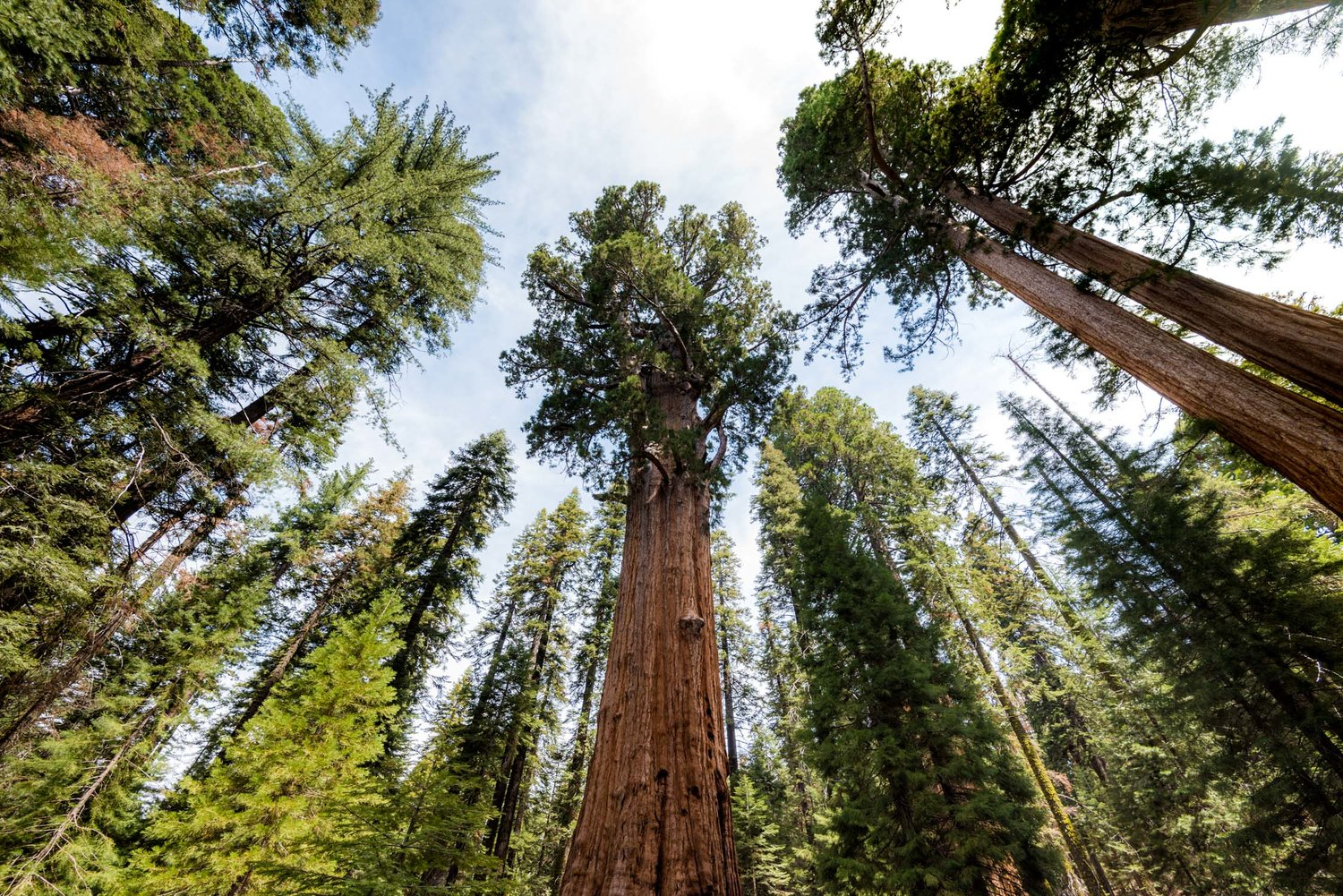 Visiting Sequoia National Park: Our California Road Trip
