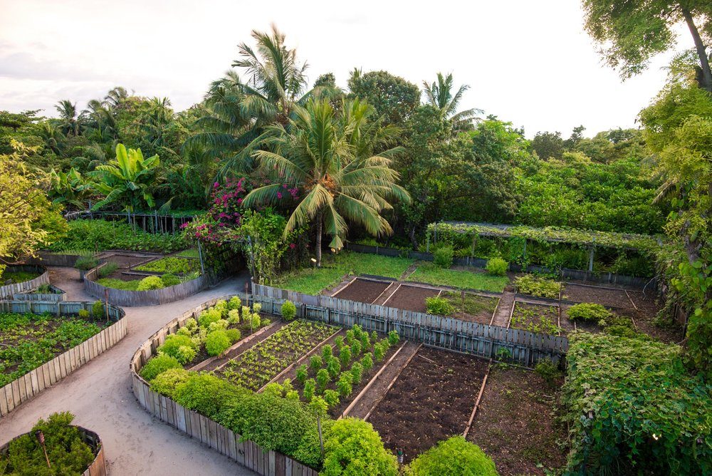 Much of the island's vegetables are grown on the island to help the hotel meet their sustainability goals.