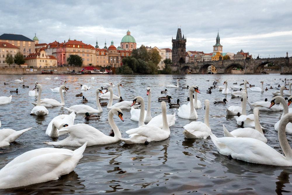 Prague-448-20171009.jpg