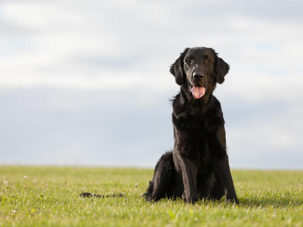 hundefotograf-hundefotografering-fotograf-sarpsborg-1