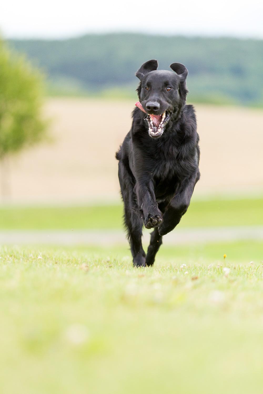 hundefotograf-hundefotografering-fotograf-sarpsborg-4