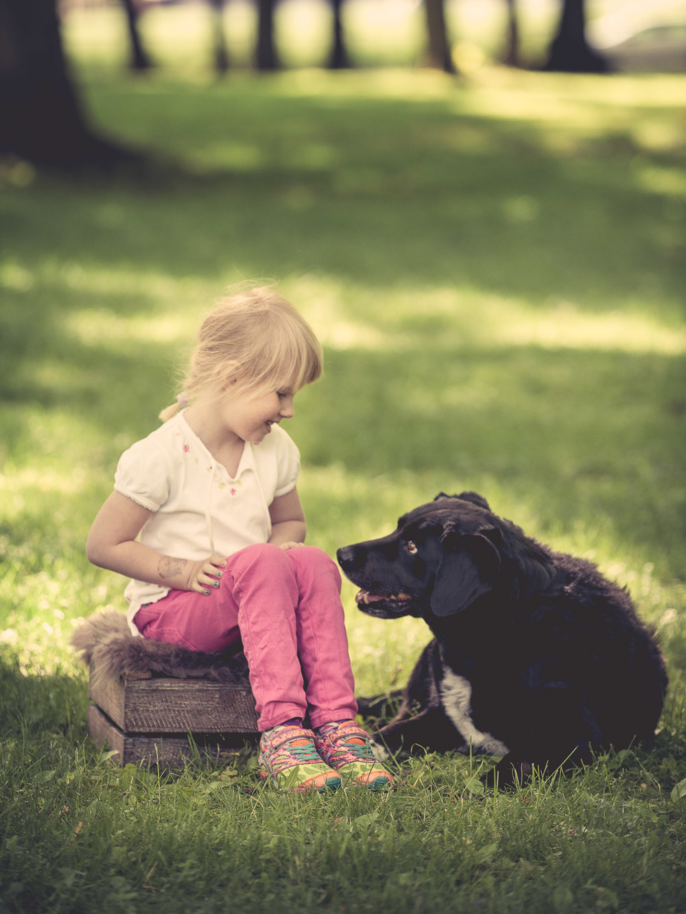 hund-hundefotograf-hundefotografering-fotograf-hodnedesign-pål-hodne--49.jpg