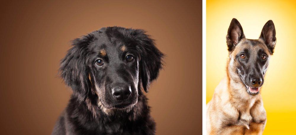 Hundefotograferinger