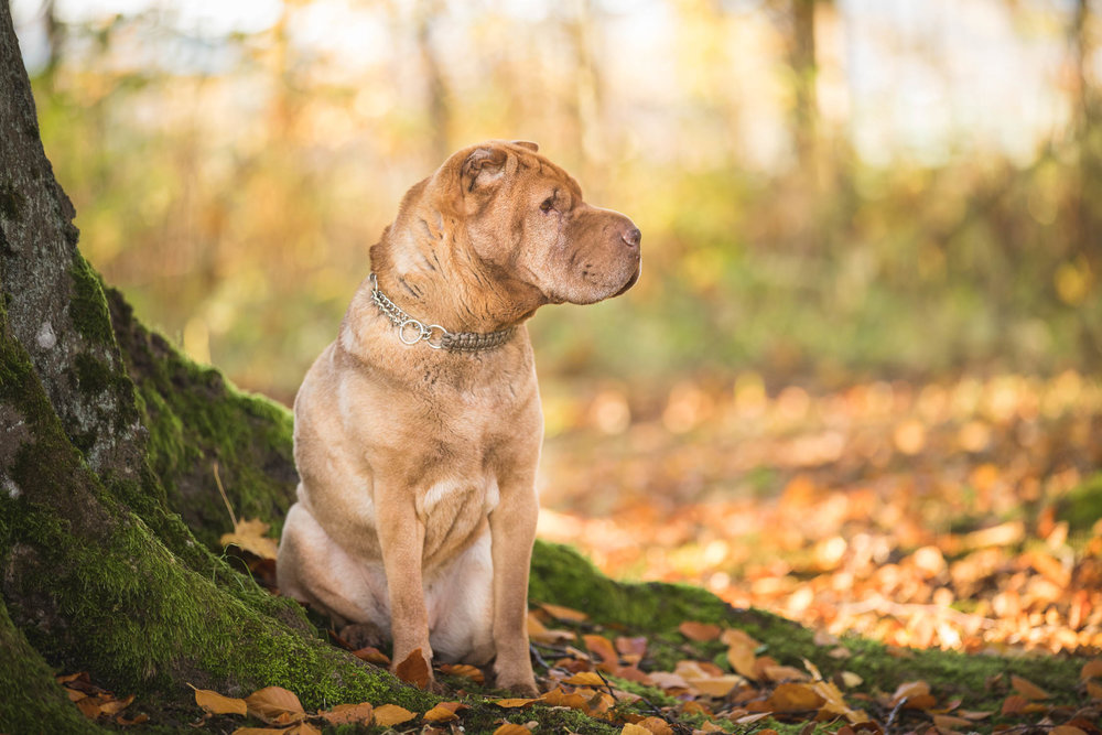 hund-hundefotograf-hundefotografering-fotograf-hodnedesign-pål-hodne-9342.jpg