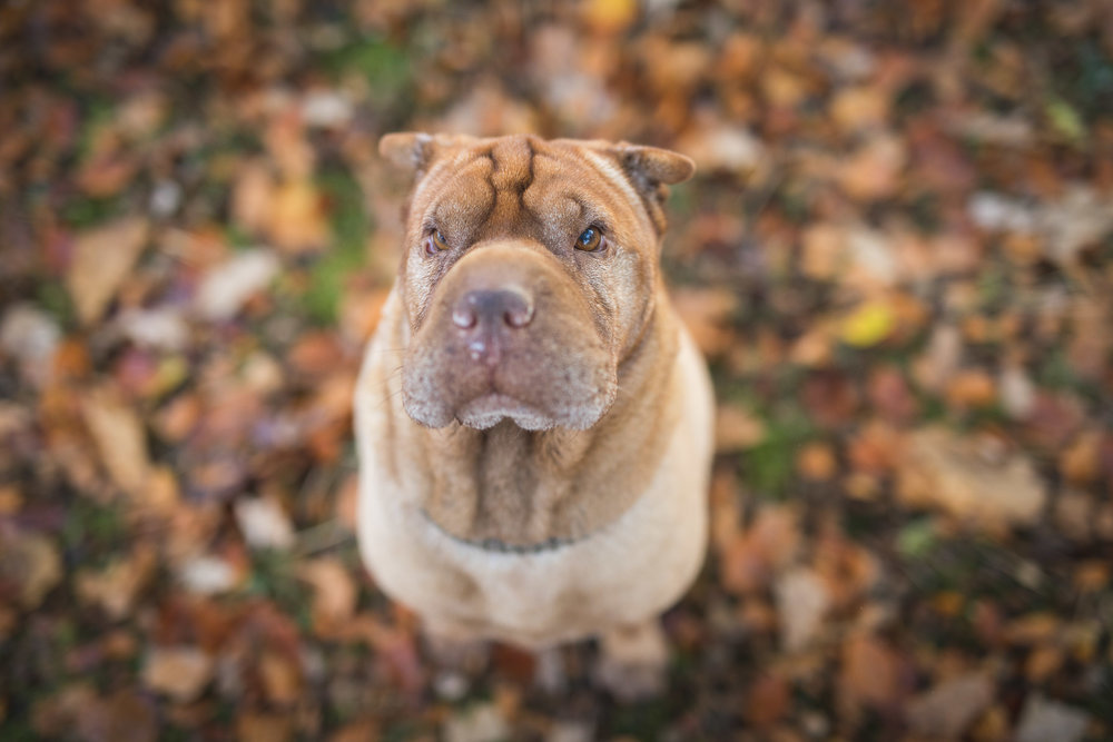 hund-hundefotograf-hundefotografering-fotograf-hodnedesign-pål-hodne-9651.jpg