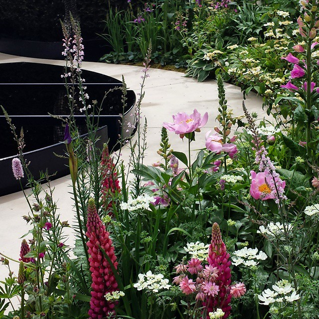 Exploring the brilliant displays at #RHSchelseaflowershow