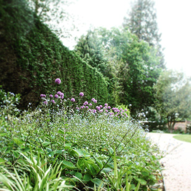 The Allium makes a striking #feature in this #private #garden. Here it is mixed in with some Liriope and Brunnera. #landscapearchitecture #design #flowers