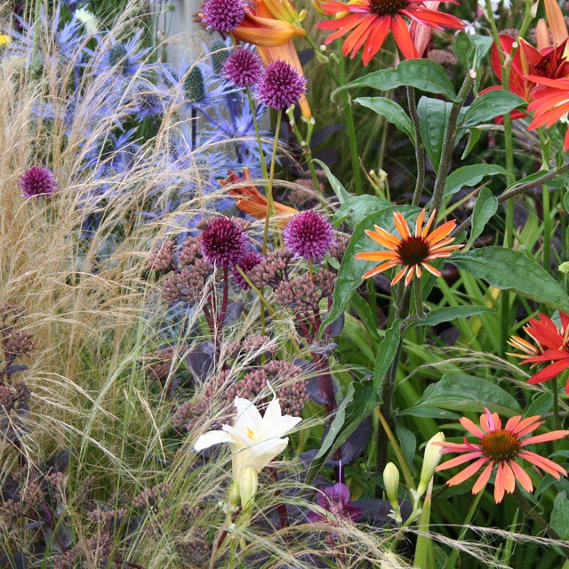 #tattonflowershow2015 #tattonpark #rhs #plantingdesign #echinacea #hemerocallis #sedum #echinops #stipa