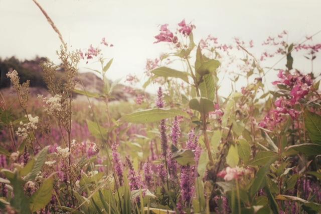 Floralscenery.jpg