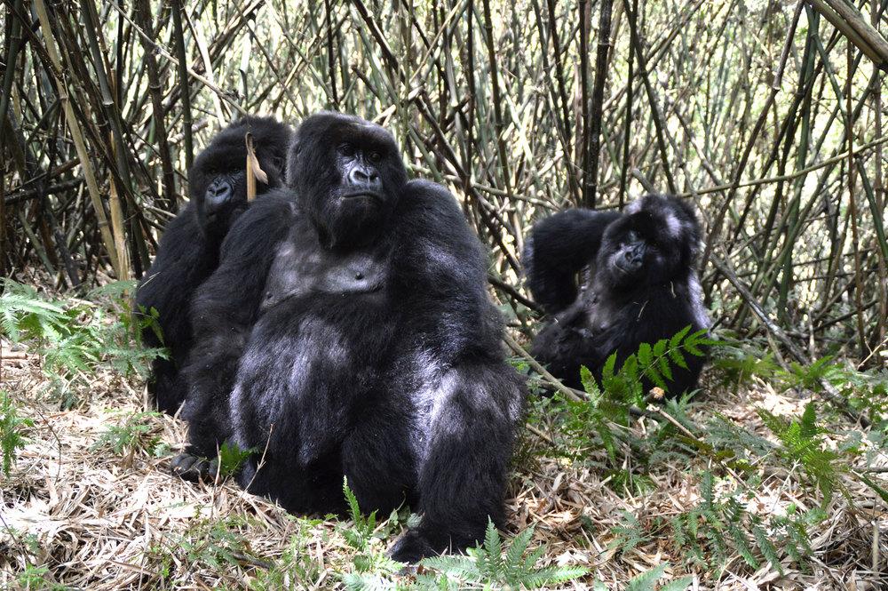 Karisimbi Family Portrait