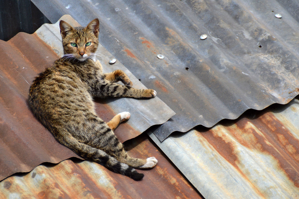 Slumcat.jpg