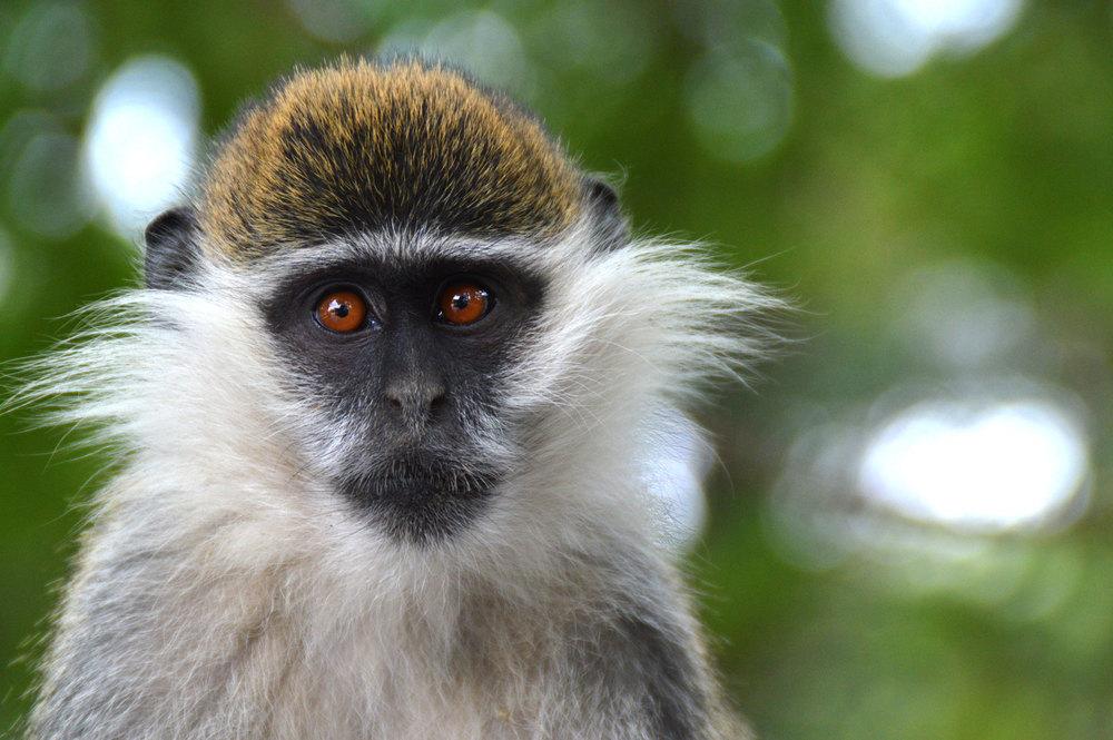 Monkey!.jpg