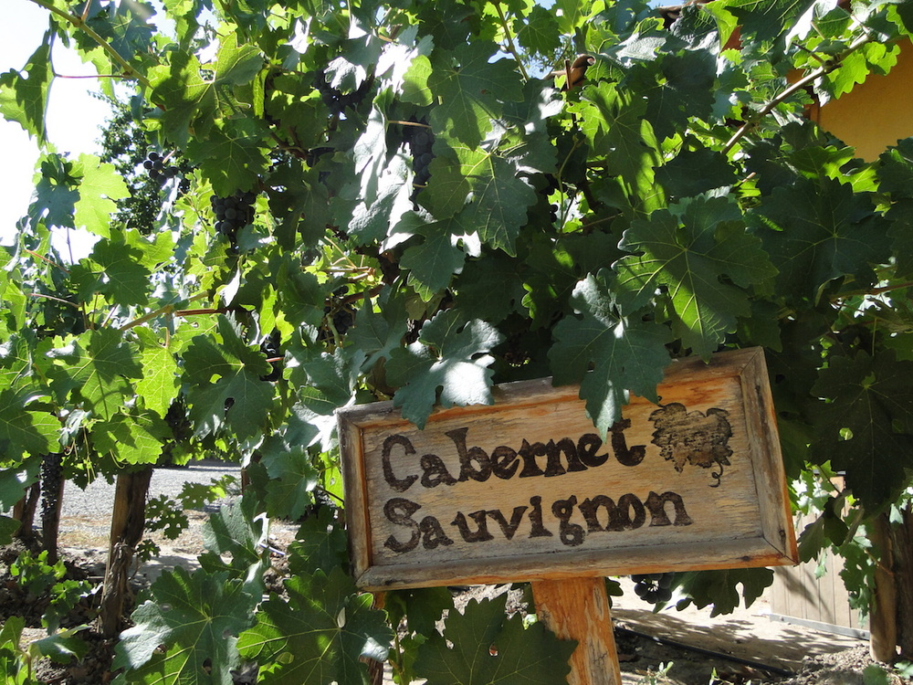 Casona Carrera Boutique Hotel Maipo Wine Valley Santiago Chile vineyard visits, tours and tastings