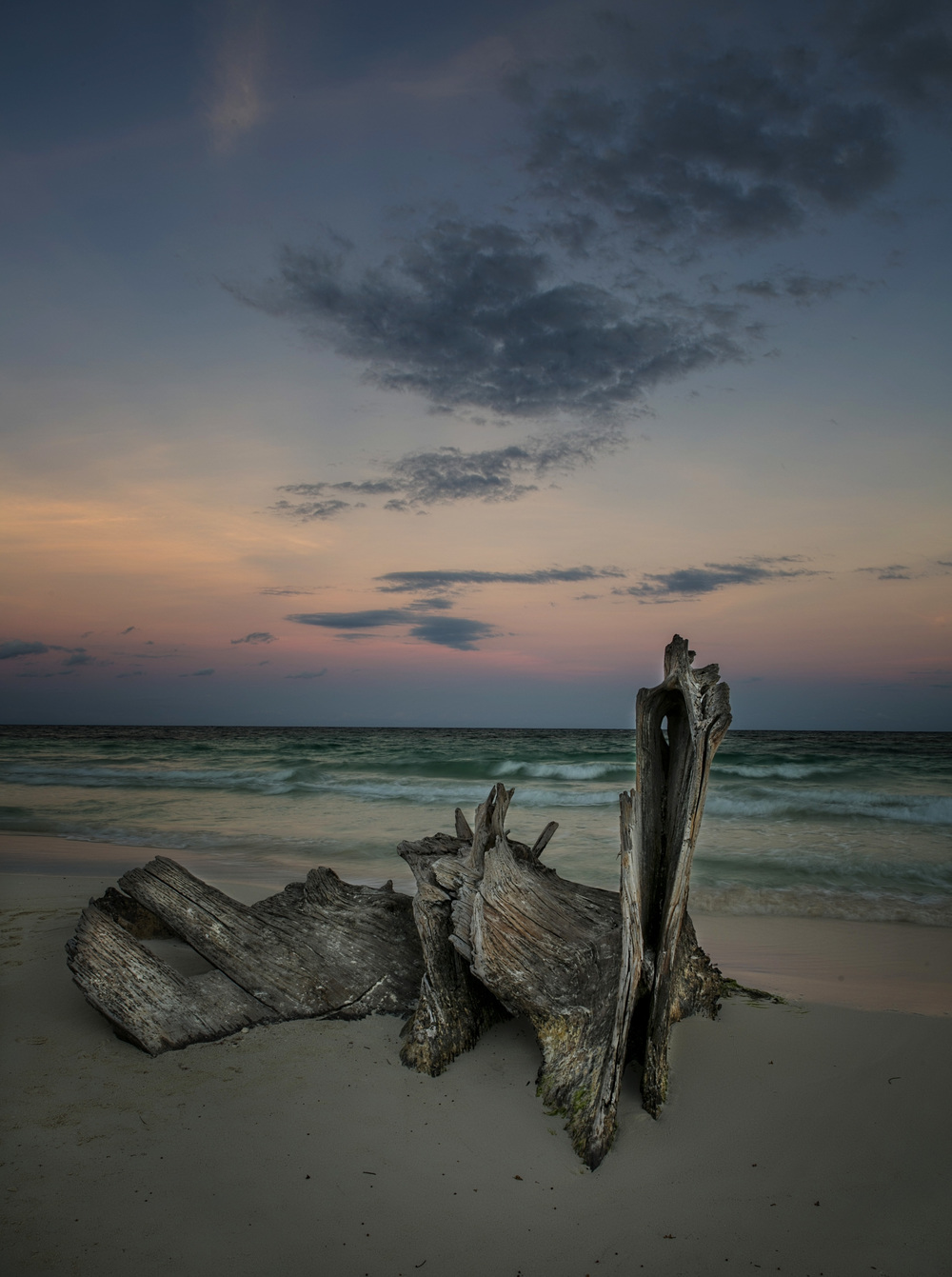 The most interesting driftwood ever....