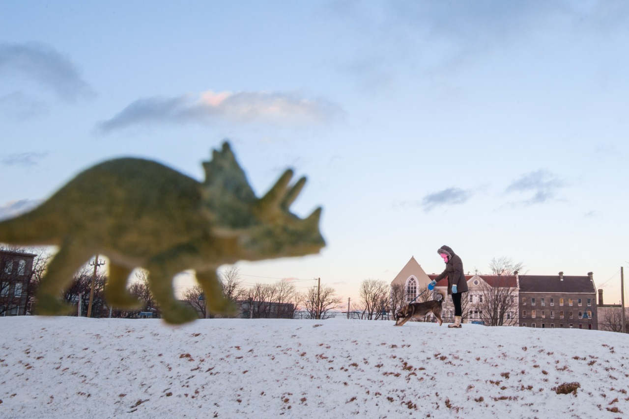 We had Bigg-E out for a walk and I was able to bust the camera out just in time to get a blurry picture of him warning off this triceratops! He's some boy!   *DS