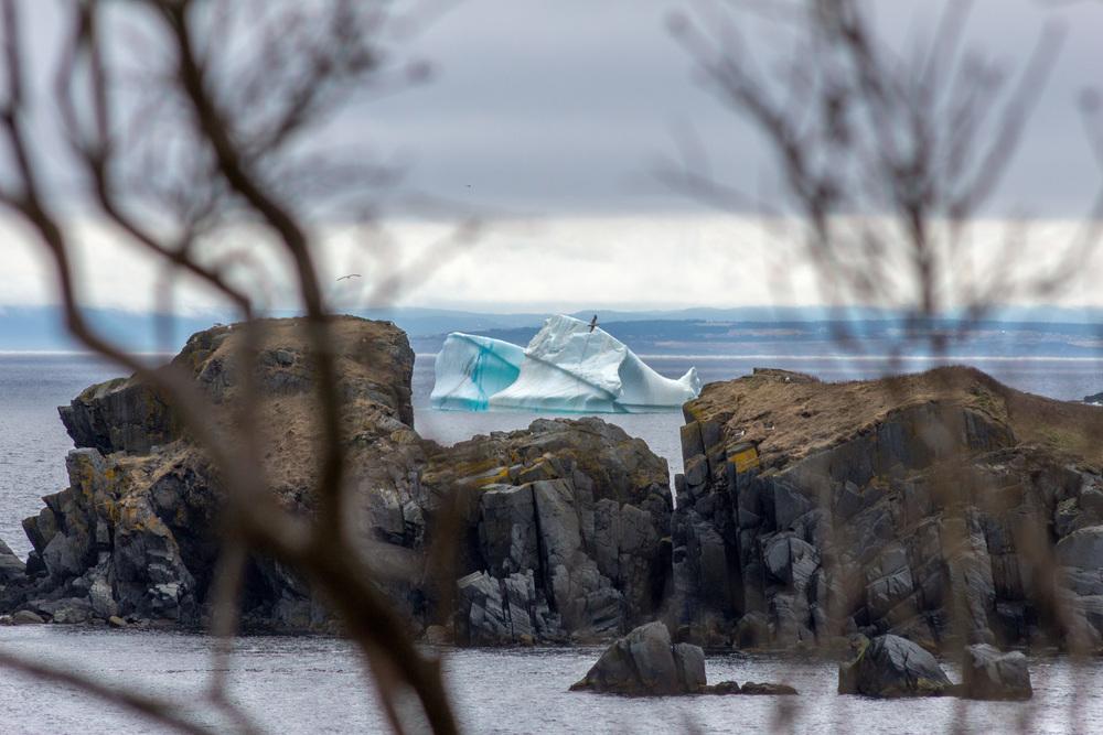 Freshwaster Iceberg