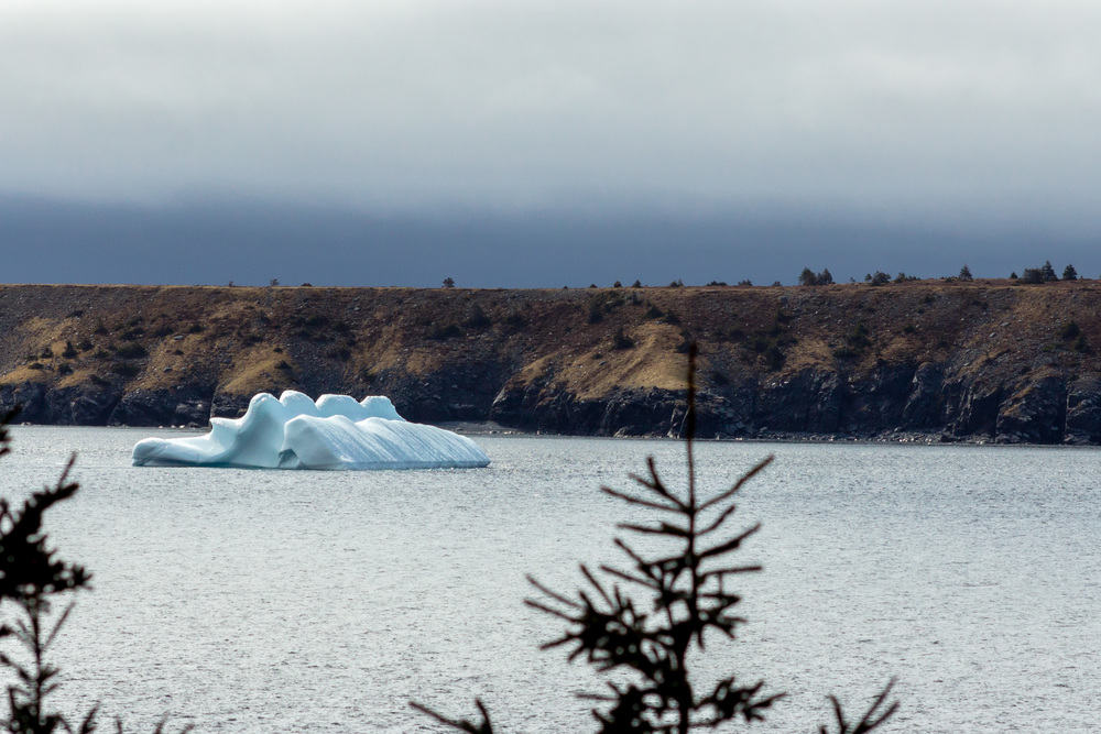 Through the trees I see an iceberg