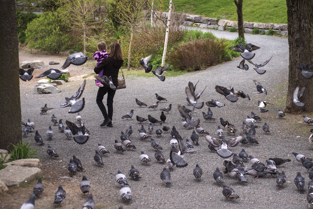 It's hilarious watching the pigeons follow people around; it's like The Walking Dead.