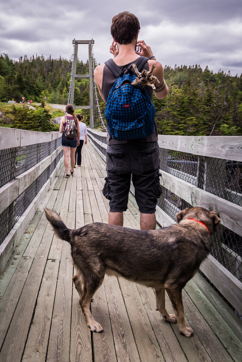 The East Coast Trail Association rebuilt the suspension bridge in the late 90s. Bigg-E didn't know what to make of it.