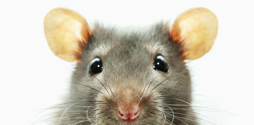 5 Rodent Facts — Envirotrol