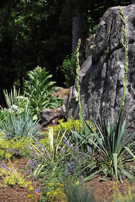 2-Xeriscape-Garden.jpg