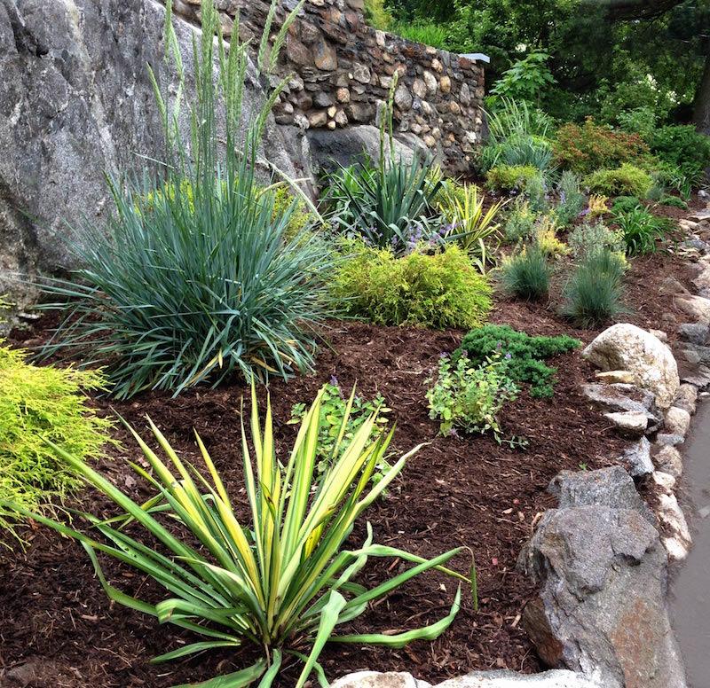 1-Xeriscape-Garden.jpg