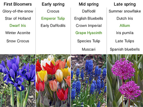 Gentil Bloom Times  Use Varieties With Various Bloom Times To Have A Continuous  Blooming Garden. Bloom Times Vary With Weather Conditions But The Flowers  Will ...