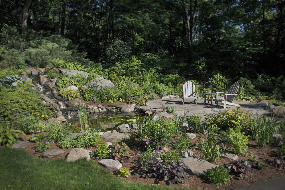 1-Native-plants-and-pond.jpg