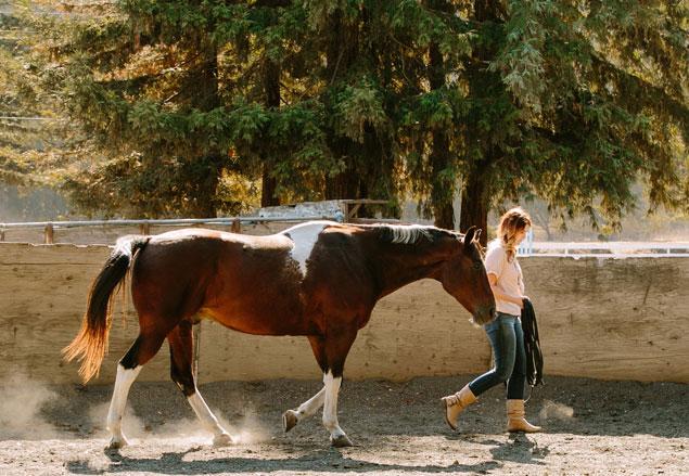 equus-1.jpg