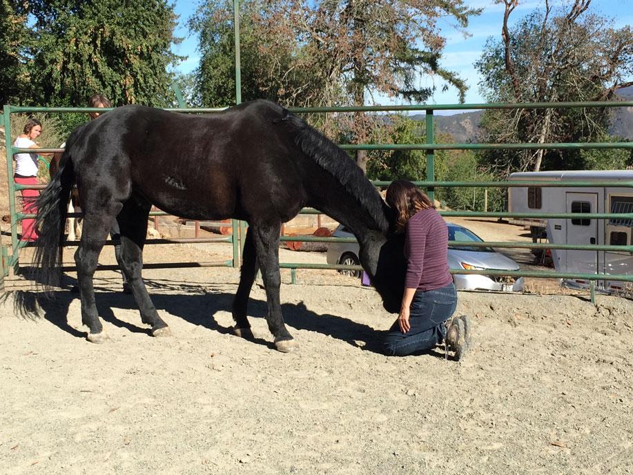 Horse-and-heart.jpg