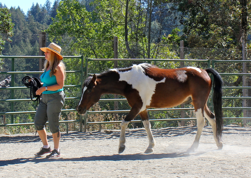 Donna and horse.JPG