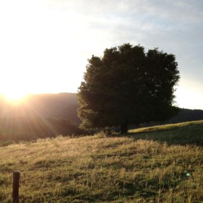 Sunset oaktree.JPG