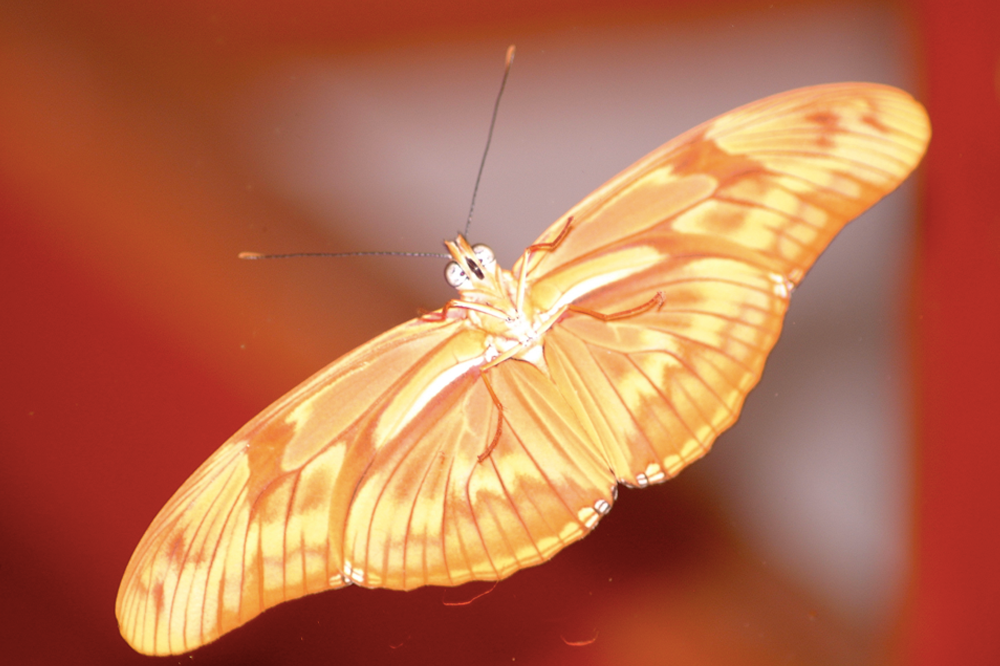 butterfly2.png