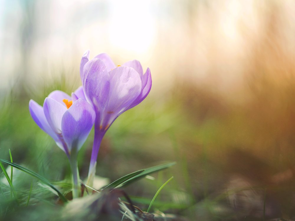 Ark Times April 2019 - Spring has Sprung!