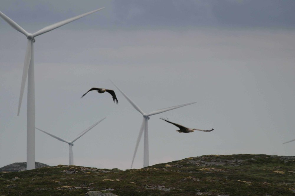Wind-Turbines-Birds-.jpg
