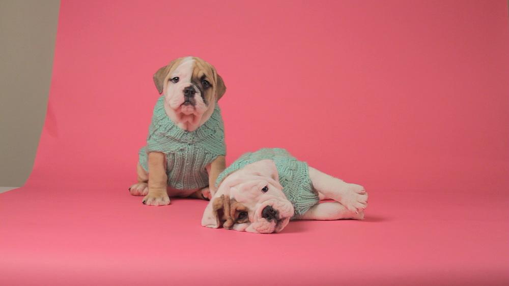 Puppy Wrangling (0-00-58-13).jpg