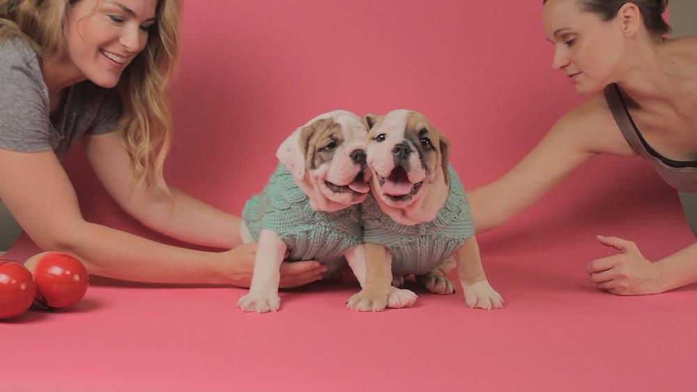 Puppy Wrangling (0-00-11-12).jpg