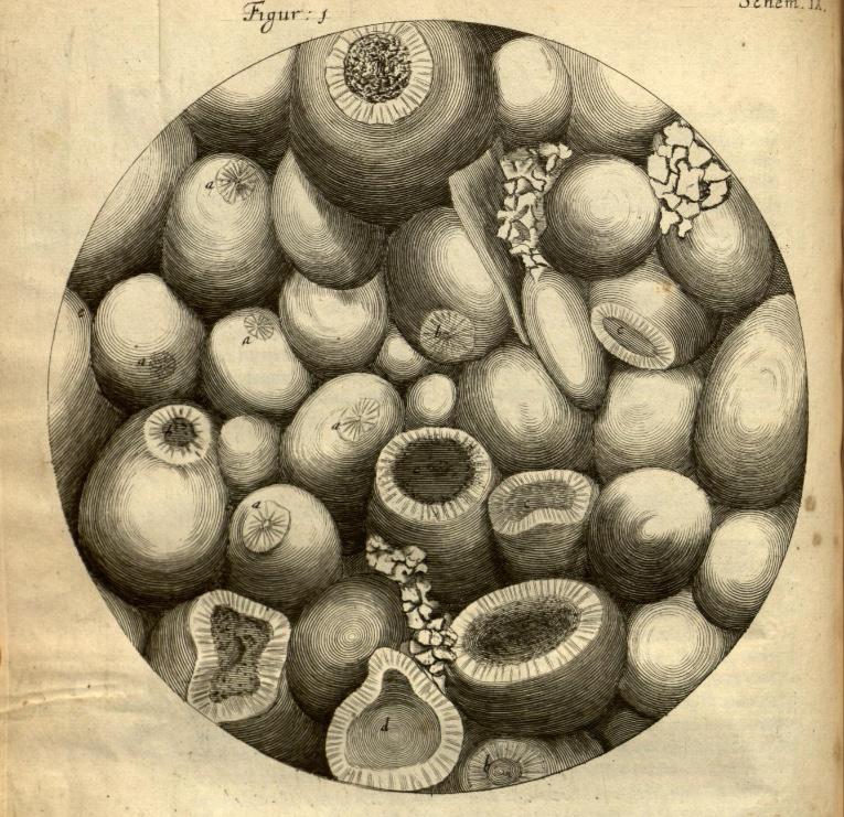 Hooke's engraving